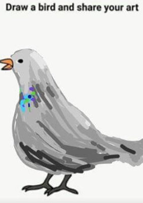 'Pidgeon' Isabel Sears-Surface/Submitted